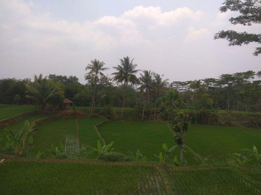 Kisah di Kampung : Balada Anak Nakal