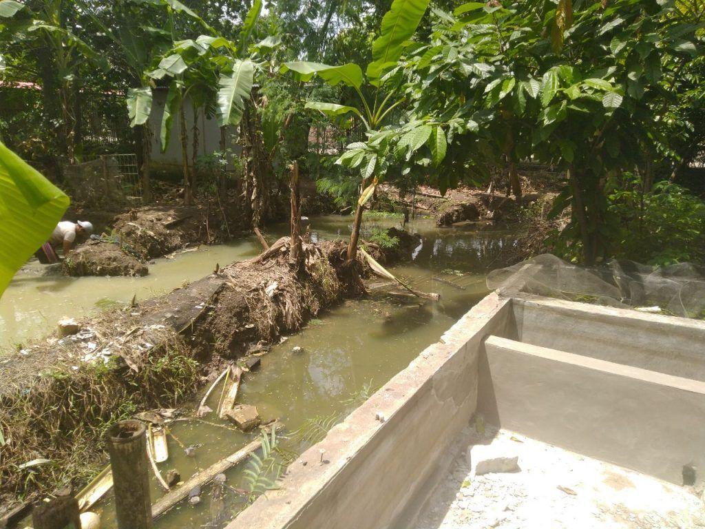 Membuat Kolam Tanah untuk Ikan Konsumsi
