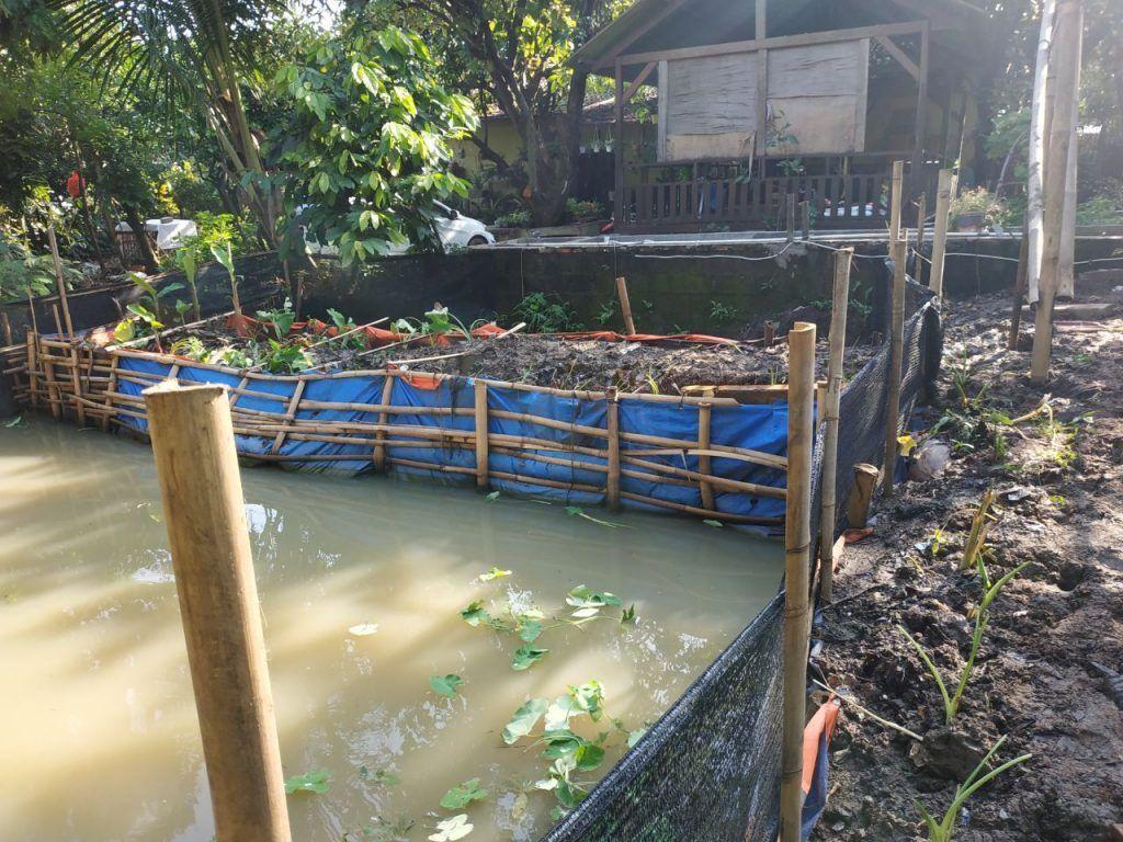 Kolam Ikan Gurame Nila Dan Patin Pt Excellent Infotama Kreasindo
