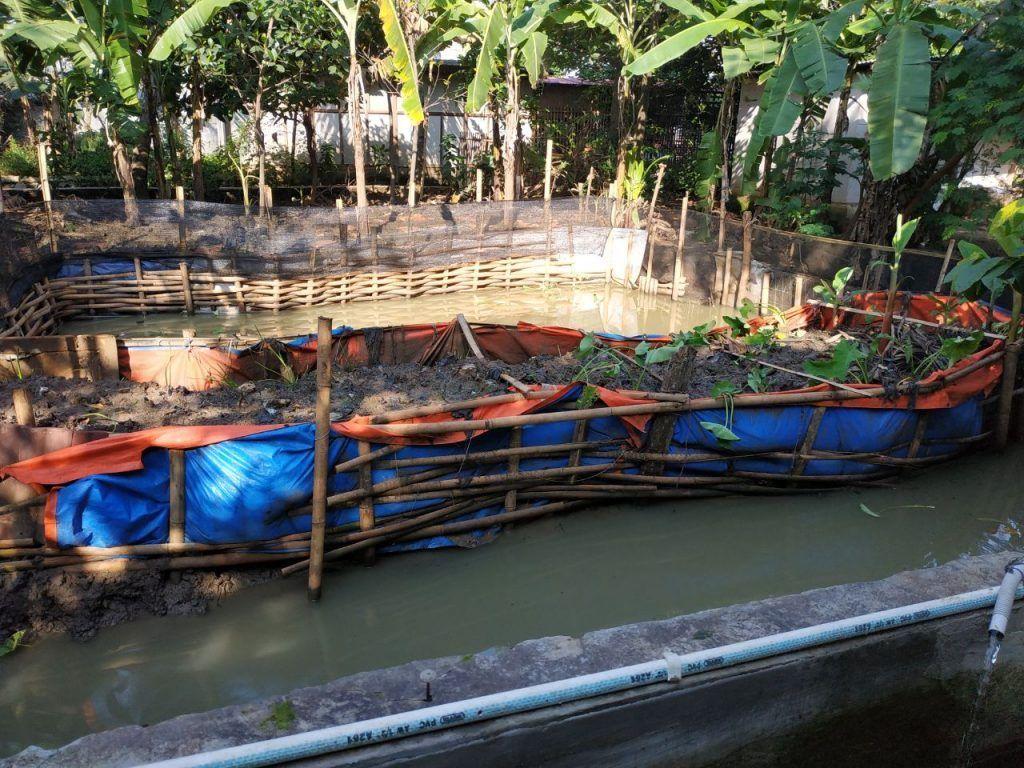 Kolam Ikan Gurame, Nila dan Patin